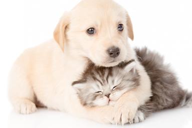 Puppy & Kitten Checks