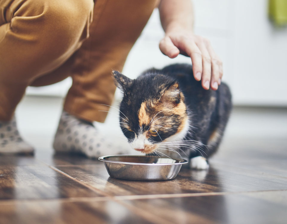 Dog and Cat Diet and Weight Management, Bushypark Vets Galway
