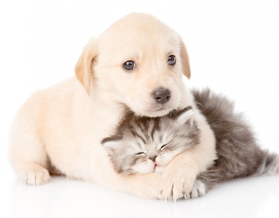 Puppie and Kitten Checks, Bushypark Vets Galway