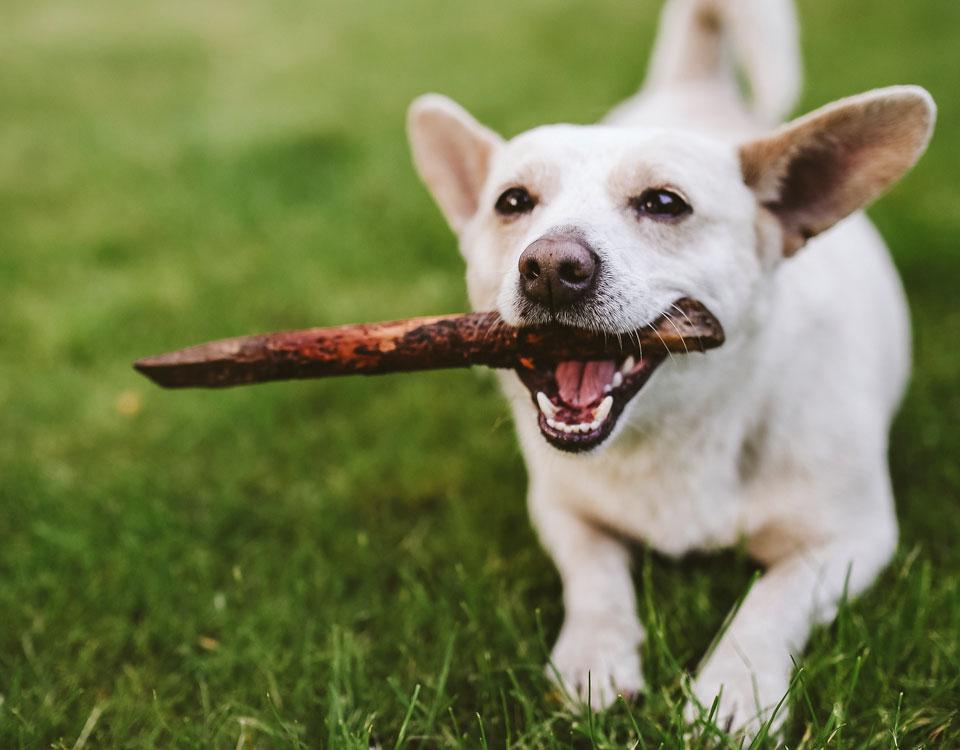 Dog and Cat Dental Checks, Bushypark Vets Galway