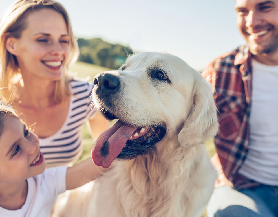 Get the best pet insurance for your dog or cat with Bushypark Vets, Galway's number one veterinary clinic