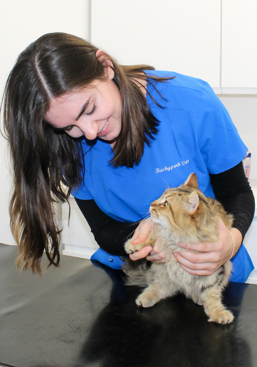 Bushypark Vet's have an expert caring team of Veterinary practitioners which are all registered with the Veterinary Council of Ireland